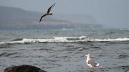 ВБаренцевом море российское промысловое судно подало сигнал SOS