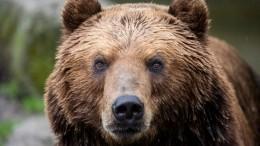Дрессировщик Руслан Солодюк объяснил причины нападения медведя наарене