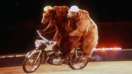 Как сделать безопасными цирковые шоу вРоссии? Репортаж