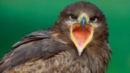 Более 100 тысяч рублей перечислили россияне «разорившим» ученых степным орлам