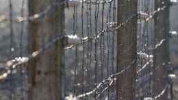 ФСБ рассекретила документы офинских концлагерях вКарелии— видео