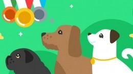 В«Одноклассниках» пройдут трансляции случшими породистыми собаками совсего мира
