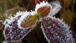 Зима трескучая: Аномальные холода надвигаются нароссийские регионы