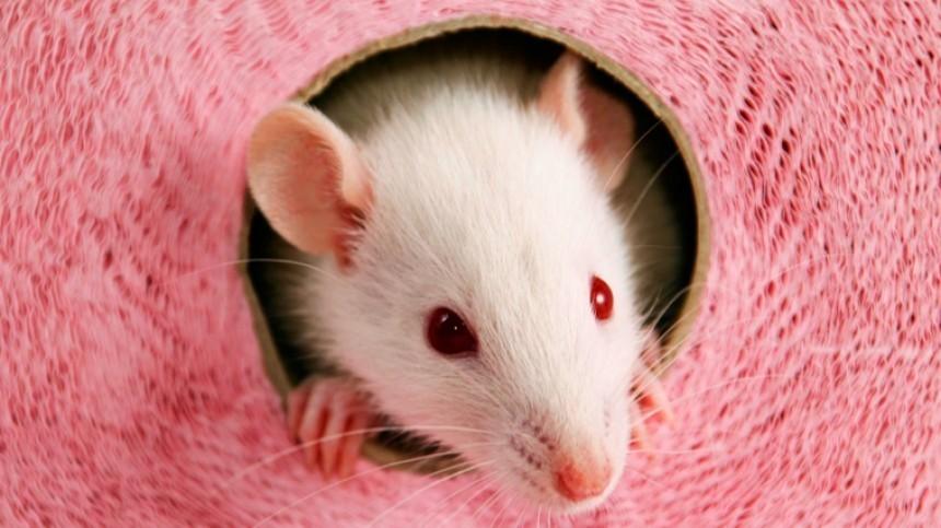 Гороскоп на2020 год Белой Металлической Крысы для всех знаков зодиака