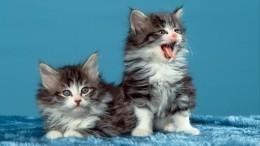 «Лунная походка» котенка рассмешила пользователей соцсети