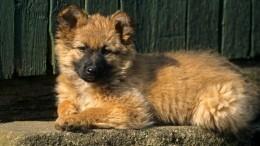 «Дослез»: Украинский чиновник протащил подороге привязанную кмашине собаку