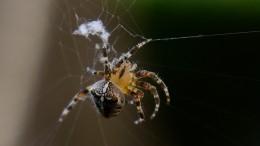 Ученые узнали, почему паутина неподвержена гниению