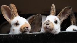 Кроличья ферма полыхает под Саратовом