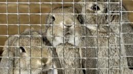 Десять тысяч кроликов погибло при пожаре наферме под Саратовом