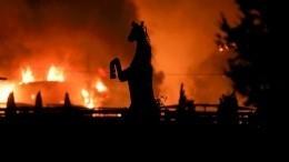 Видео: Лошадь героически спасает сородичей напожаре вСША