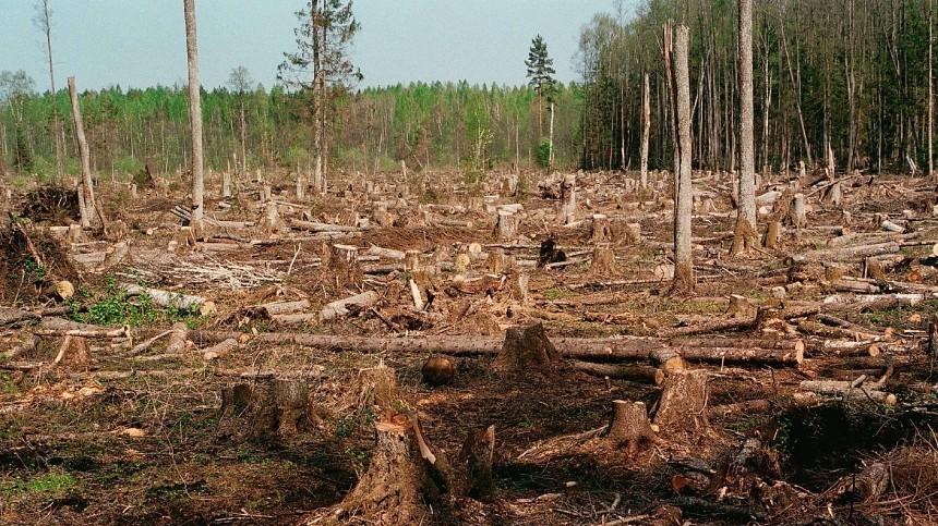 ВИркутской области пресечена масштабная вырубка леса
