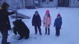 Жители Иркутской области возмущены издевательствами над медведем— видео