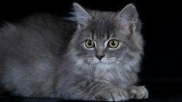 Кошку-наркокурьера задержали вТатарстане