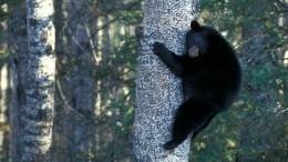 Видео: Полицейский спас медведя, застрявшего вмусорном контейнере