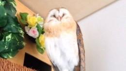 Самая милая сова вмире умеет улыбаться икататься навелосипеде
