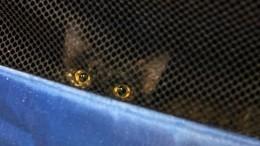 Хозяин кота, которого непустили всамолет, наказан лишением всех бонусов