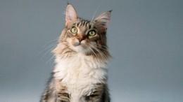 Как кота-наркокурьера подменили втульском суде— видео