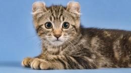Тверской пожарный спас надышавшегося угарным газом котенка— трогательное видео