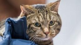 Похудением кота, которого непускали всамолет, занялись вХК«Адмирал»