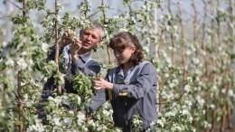 ВРоссии стартовал проект поддержки фермерских стартапов