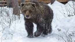 Бегущего потоннелю изРоссии вЮжную Осетию медведя сняли очевидцы навидео