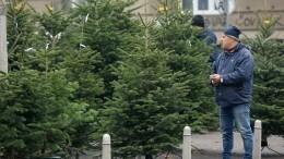 Какую елку лучше покупать наНовый год— советы отРоскачества