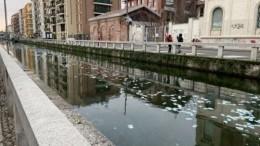 Денежная река взбудоражила жителей Милана
