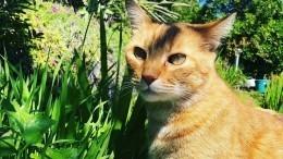 Всети обсуждают видео с«говорящим» котом Гамбино