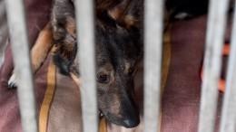 Живодерня работала под видом приюта для бродячих собак вДагестане— видео (18+)