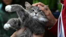 Комната, прачечная истоловая: необычный приют для животных появился под Владивостоком