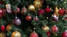 Новогоднюю елку украли издетского сада вЕкатеринбурге