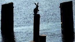 Кто изачем хочет взять под опеку скульптуру знаменитого зайца уПетропавловской крепости