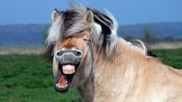 Истязание лошадиным ржанием закончилось уголовным делом вНижнем Новгороде