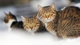 Видео: Неравнодушный житель Петербурга спас кота, упавшего вканал Грибоедова