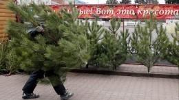 Экоактивисты рассказали, как без природных потерь встретить Новый год