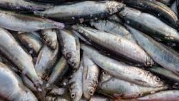Две трети рыбных консервов вмагазинах Петербурга несоответствуют стандартам качества