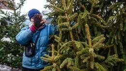 «Зеленая альтернатива» проверит законность работы елочных базаров вРоссии