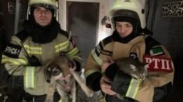 Сотрудники МЧС спасли 170 кошек исобак при пожаре вГрозном