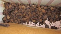 «Дом Дракулы»: воЛьвове впустующей хате решили перезимовать тысячи летучих мышей