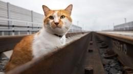 Кот Мостик провел инспекцию железнодорожной части Крымского моста