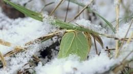 Зеленая трава ипроснувшиеся звери: погода вРоссии продолжает удивлять
