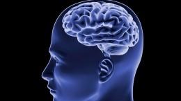 Ученые США иЯпонии отчитались осоздании искусственного мозга