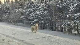 «Кускунский Хатико»: Пес три месяца ждет хозяев натрассе вКрасноярском крае