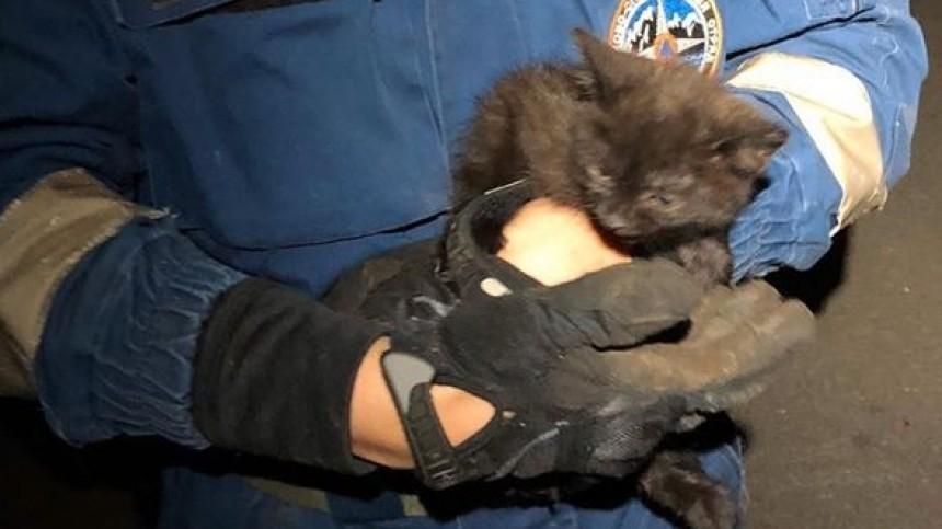 Трогательное видео спасения котенка извентиляции вПетербурге