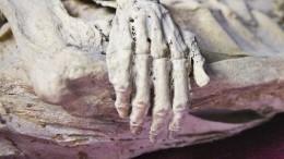 Фото: Житель Петербурга два года хранил набалконе мумию