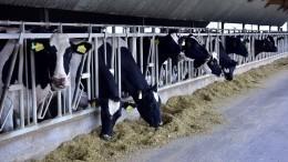 Изменить нормы использования антибиотиков при производстве мяса имолока хотят вРФ