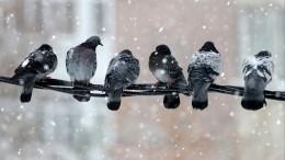 Мощные снегопады накрыли десятки регионов России