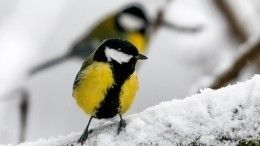 Европейская зима: синоптики рассказали опогоде вцентральной части России вконце января