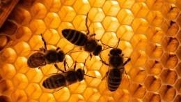 Зосима-пчельник, 17января: что можно икатегорически нельзя делать