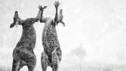Божье благословение: полыхающую Австралию накрыли мощные ливни